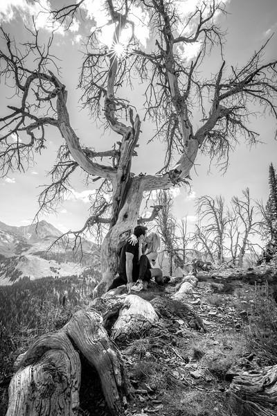 The Knotty Tree