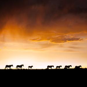 12X12 Horses Eagle Ridge