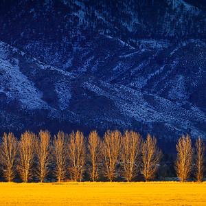 12x12 Carson Valley