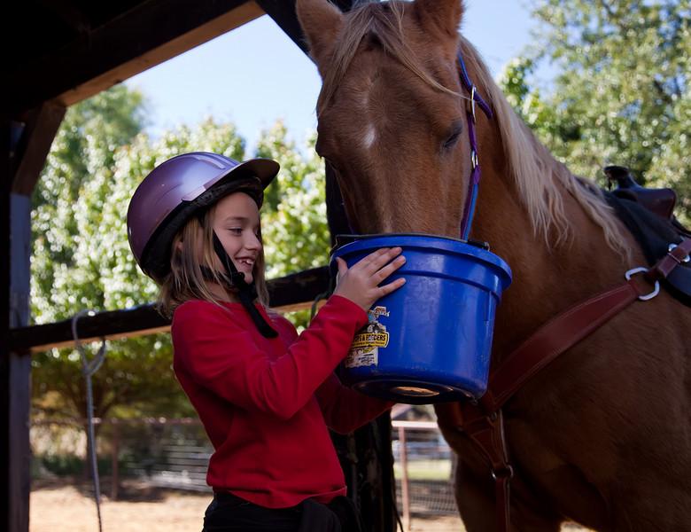 Horse farm, Southlake, Texas (November 2010)