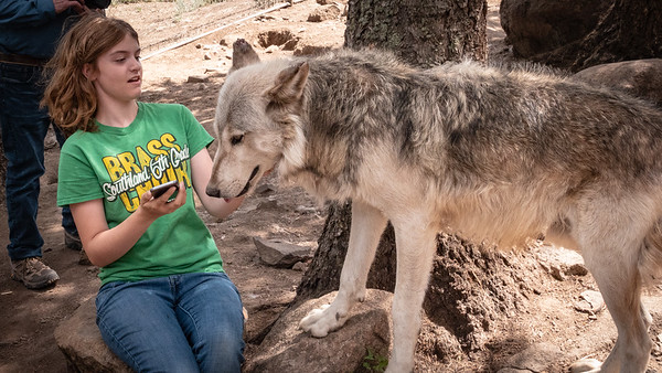 Wolves 08-07-18 with Family-05992
