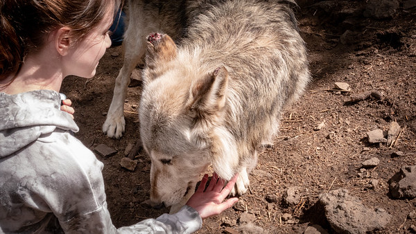 Wolves 08-07-18 with Family-05994