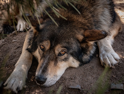 Wolves 08-07-18 with Family-05977