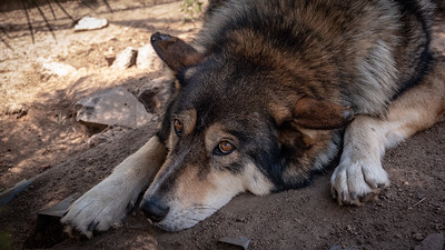 Wolves 08-07-18 with Family-05973