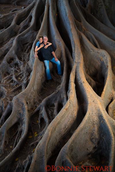 The big tree!  Balboa Park