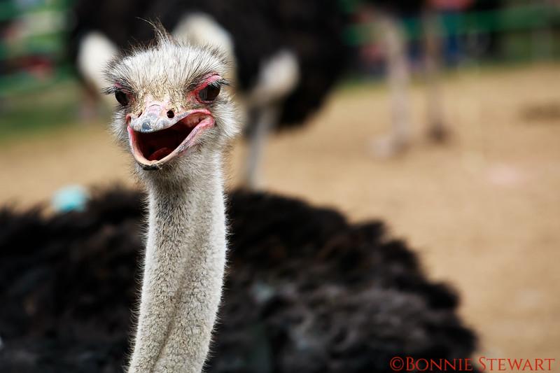 Happy Ostrich!