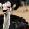 Happy Ostrich!