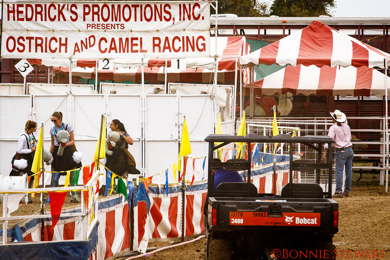 Ostrich and Camel Races