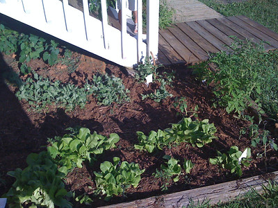 The Bent Spoon Garden, de-weeded
