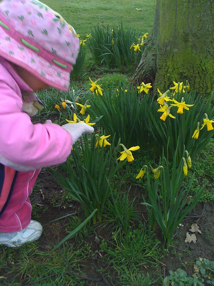 Examining Spring