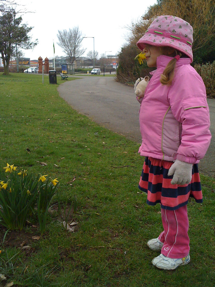Daffodils at Hove Park