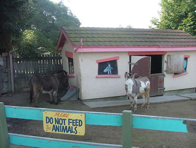 Fairyland Donkeys