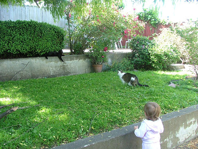 Cat confrontation in the back yard