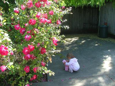 Sam among the backyard flowers