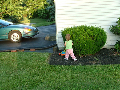 The mulch needed mowing