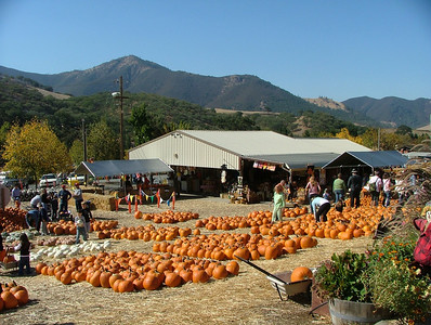Clayton Valley Pumpkin Patch