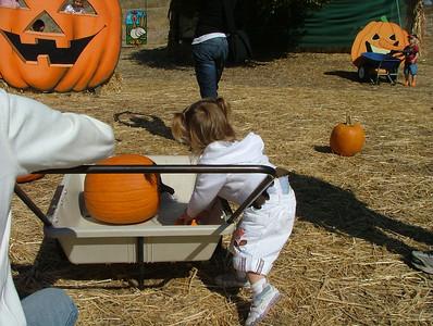 Loading pumpkins in the wheel barrow