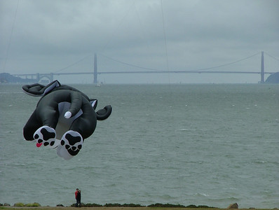 Dog kite and Golden Gate Bridge