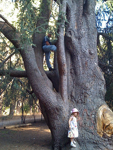 Dad climbs in San Leandro