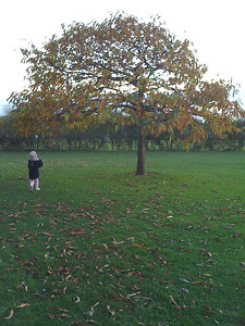 Autumn comes to Dyke Road Park