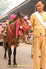 A Decorated Horse Prepared to Lead The Procession of Offerings