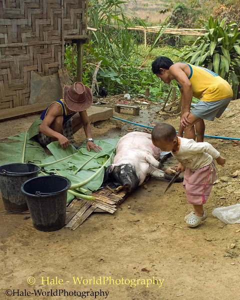Butchering A Pig for Tomorrow's Festival in Huay Sua Tao Refugee Camp