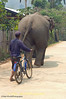 Elephant Followed by Its Mahout Stroll Through Baan Huay Sua Tao, Thailand