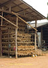 Racks of Garlic Drying In Barn Located in Baan Nai Soi, Thailand