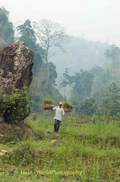 Shan Farm Worker earning $3.50 A Day Hauling Garlic to Main Road, Baan Nai Soi, Thailand