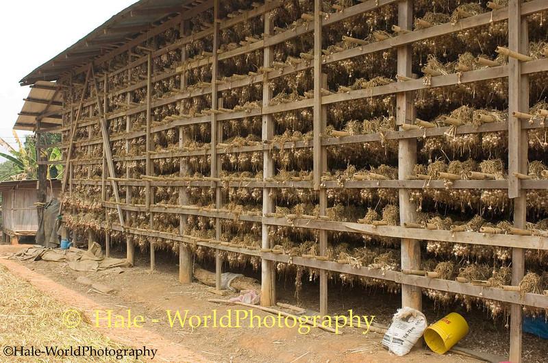 Garlic Drying Barn in Ban Nai Soi, Thailand