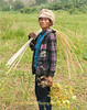 Shan Farm Worker Carrying Bamboo Strips To Bundle Harvested Soybean Plants