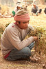 Shan Garlic Worker