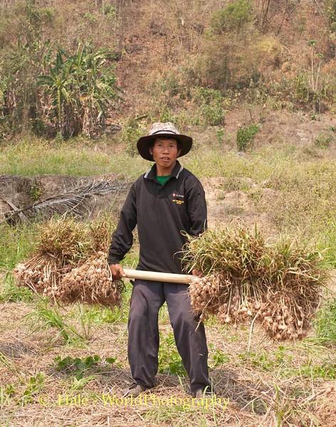 Lifting Garlic
