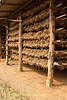 Racks of Garlic Drying in Barn Located In Ban Nai Soi