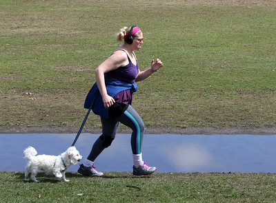 """People enjoy spring weather at Shedd Park during Covid-19 emergency. Julee  Avallone of Lowell, a musician who plays flute, sax and clarinet, like to do about 45 minutes of laps around the track at Shedd Park in Lowell with her Maltipoo dog, Merlin. """"It's the way I stay sane,"""" she said. (SUN/Julia Malakie)"""