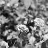 Butterfly (01868)