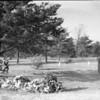 Cemetery (03988)