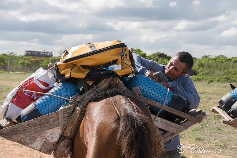 One of the supervisors of the horses secures the load