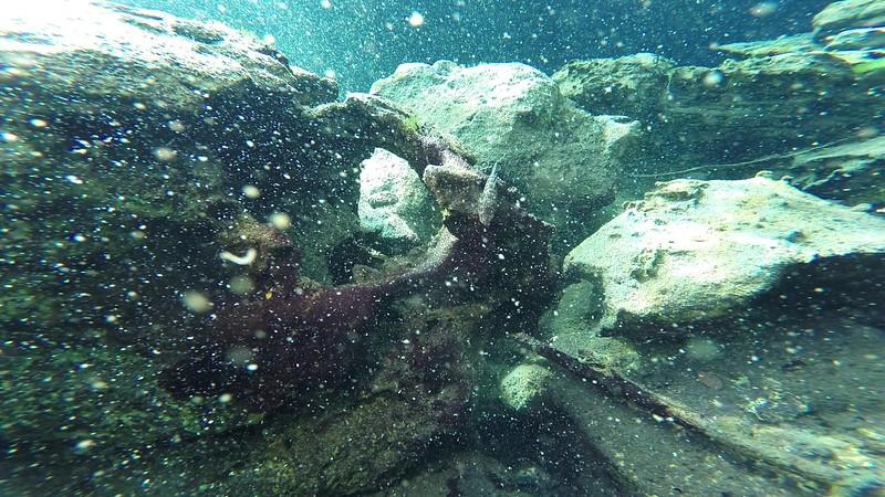 Fish in cenote Tangue Azul