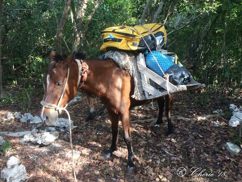 Back on horseback