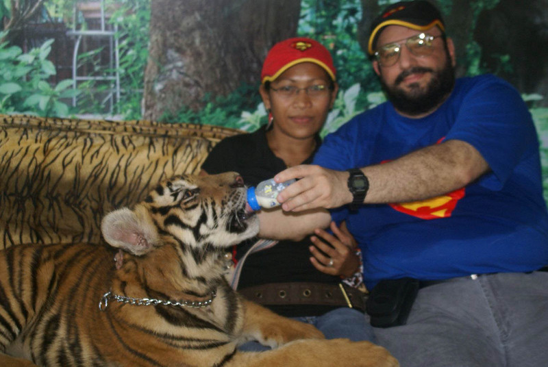 Feeding the tiger with Even at Zoobic at Subic Bay in the Philippines