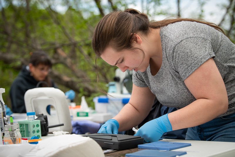 UAA Biology Graduate Student Rachael Kramp samples sticklebacks at South Rolly Lake as researchers from UAA, University of Massachusetts Lowell, University of Connecticut, and University of Texas at Austin collaborate on a joint field collection of stickleback fish. The tiny and abundant fish are the subject of intensive study at UAA and elsewhere because of their genetic variability and their surprising physiological parallels with humans.<br /> <br /> 190528-KELLY IRELAND STICKLEBACKS-JRE-0461