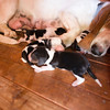 Lola and her 5 day old puppies.  Suki is in the front.