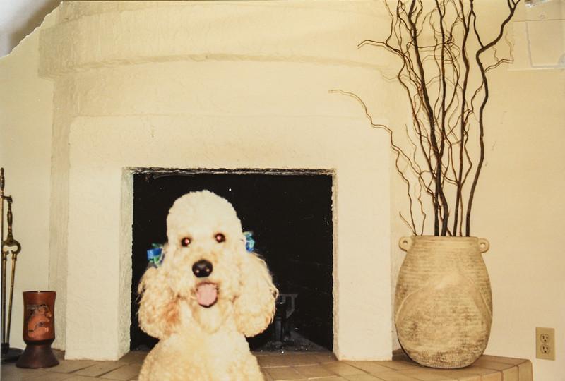Charlie, Dave's dog