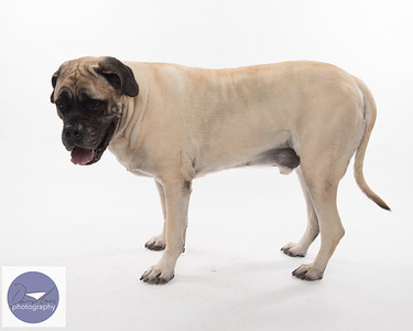 Taylor dogs set 2-9315