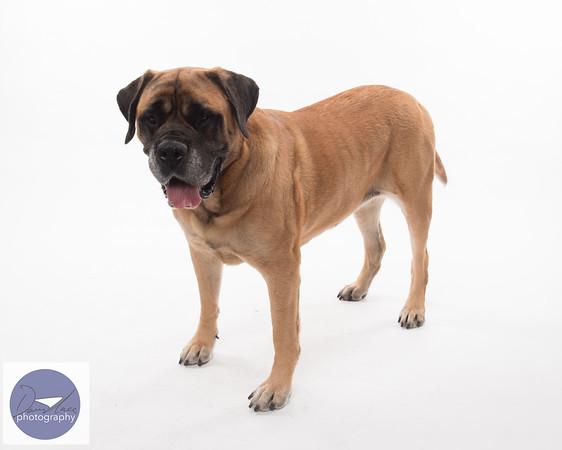 Taylor dogs set 2-9286