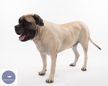 Taylor dogs set 2-9346