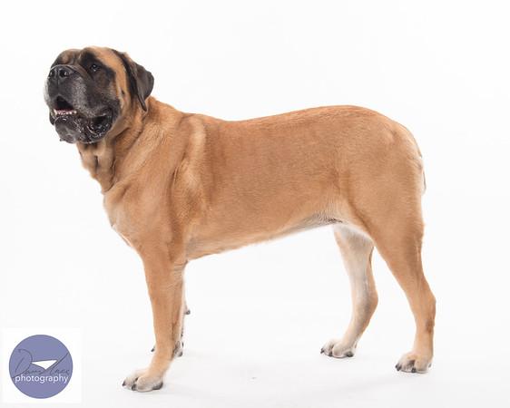 Taylor dogs set 2-9268