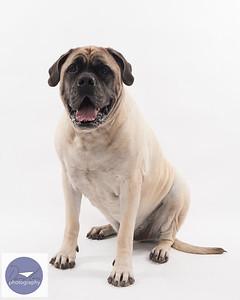 Taylor dogs set 2-9351