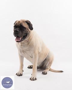 Taylor dogs set 2-9355